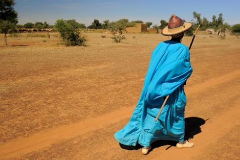 Fulani herdsman in blue robe with his cattle. Along the road from Safara to Mopti