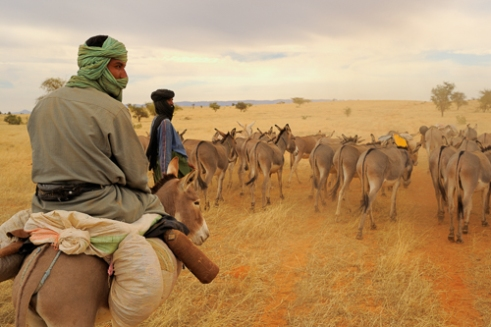Fulani herdsman with his donkeys. Road from Mopti to Timbuktu