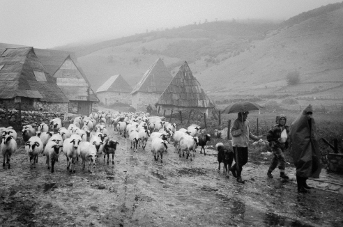 A rain storm in the high mountain village of Lukomir on Bjelasnica Mountain does not deter the shepherds or the sheep.