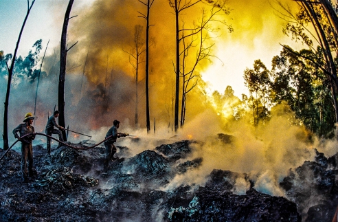 Firefighters work to extinguish a fire in a small forest. Sao Leopoldo, Rio Grande do Sul, Brazil