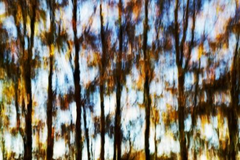 Arboreal Kaleidoscope