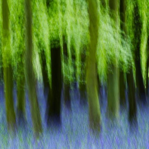 Springs Woods