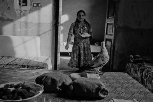 Haman meshwi (grilled pigeon) Garagos, Qus, Egypt