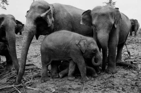 Pinnawala Elephant Orphanage Rambukkana, Sri Lanka