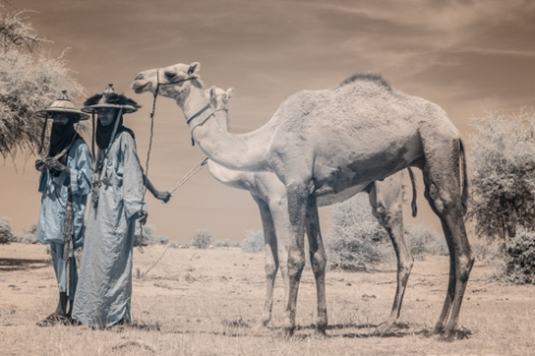 Wodaabe men with their camels