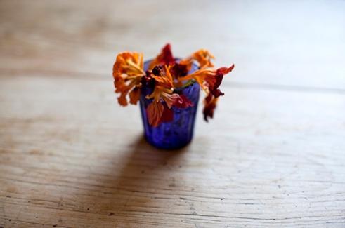 tulip_13