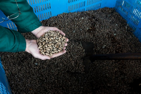 Recycled Olive Pits as Fuel
