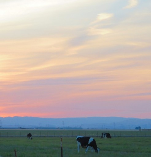 pastel-pastoral-peace