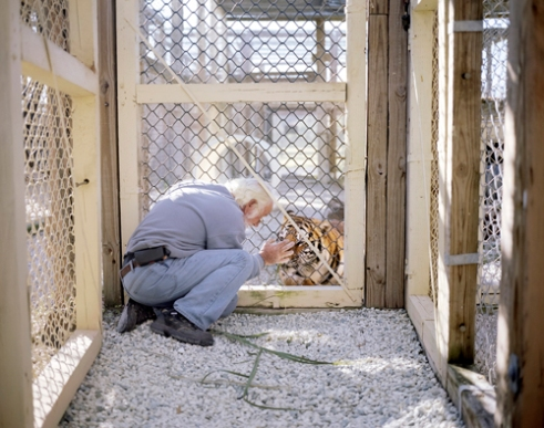 "Brian and his wife founded the ""Tiger Encounter and Rehabilitation Sanctuary (TEARS)"" in Mims Florida where they have housed recued tigers for years at their home in Mims Florida. Raising tigers comes at a great expense and these caretakers are diligent in their efforts to provide the proper enrichment for their big cats, which are considered beloved family members. 2014."