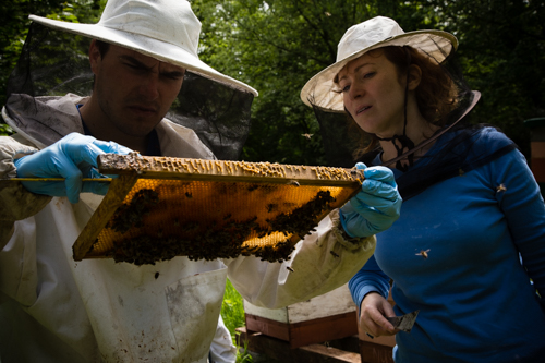 Long Live The Bees: The Essential Role Of Pollination -Edge of Humanity Magazine